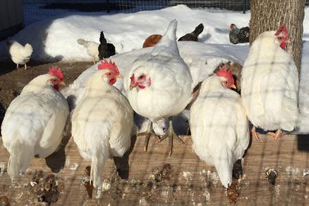 Farm Fresh Eggs 1