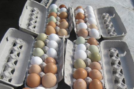 Farm Fresh Eggs 5